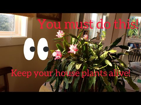 How to Leach Potted Plants