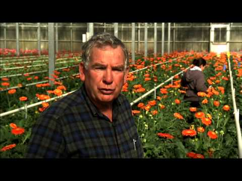 It's a Jungle out There: UC Davis Gives Flower Industry Competitive Edge