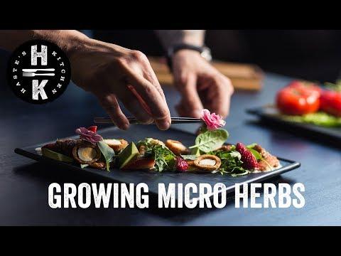 Micro Herb Farm 33 meters below London!