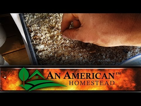 Insect Frass For The Garden - Off Grid Homestead