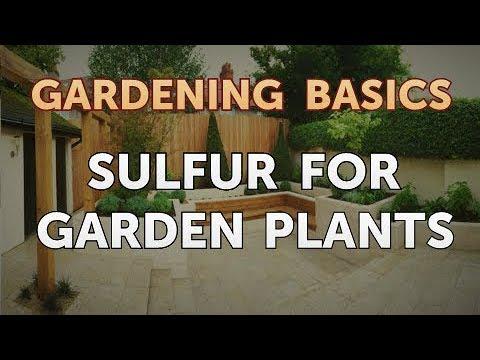 Sulfur for Garden Plants