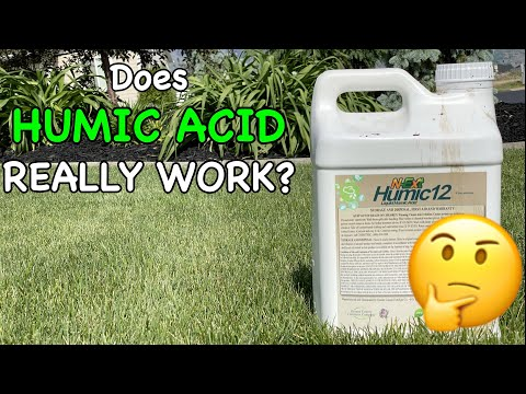 Does Humic Acid Really work for Lawns?   2 Year Humic Acid Results