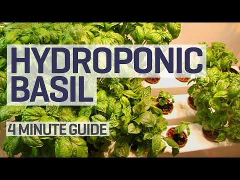 NFT Hydroponics Basil Perpetual Grow Guide