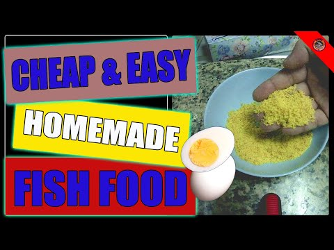 Cheap & Easy Homemade Fish Food   High Protein