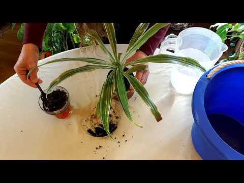 How to Get Rid of Salt in Houseplant Soil (Part 1)