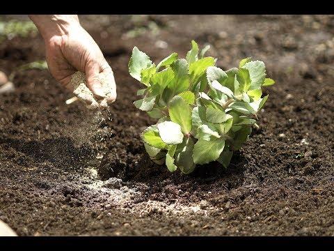 How To: Properly Apply Organic Fertilizer | Organic Fertilization 101