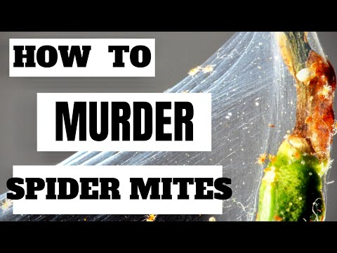 How To Kill Spider Mites On Houseplants