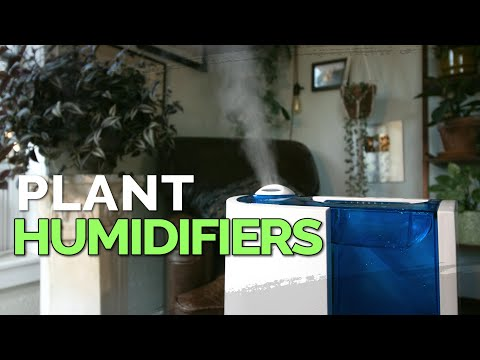 How to Use a Humidifier for Your Houseplants 💦🌱