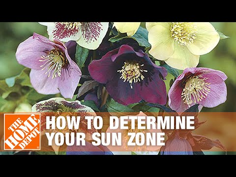 How to Determine Your Sun Zone and Plant a Shade Garden | The Home Depot
