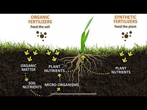 FULL VIDEO l Inorganic VS Organic Fertilizer Explained l Rosas Organic Urban Farming