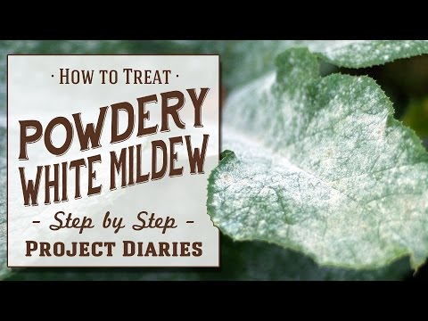 ★ How to: Treat Powdery White Mildew (A Complete Step by Step Guide)
