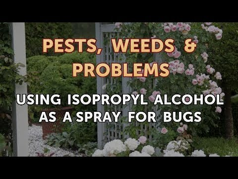 Using Isopropyl Alcohol As a Spray for Bugs