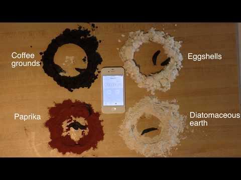 Comparing slug control methods: Coffee, Eggshells, Paprika, Diatomaceous earth