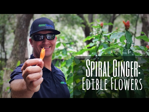 SPIRAL GINGER: A Shade Loving Showstopper with Edible Flowers
