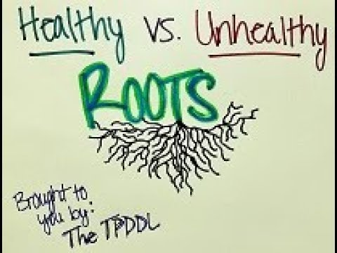 WHAT Wednesday: Healthy vs. Unhealthy Roots