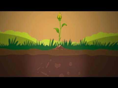Soil Nutrients and Phosphorus: The Molecular View
