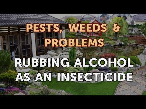 Rubbing Alcohol As an Insecticide