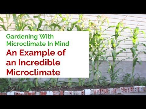 Gardening With Microclimate In Mind - An Example of an Incredible Microclimate