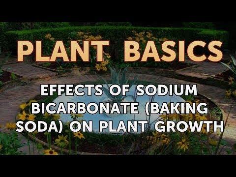 Effects of Sodium Bicarbonate (Baking Soda) on Plant Growth