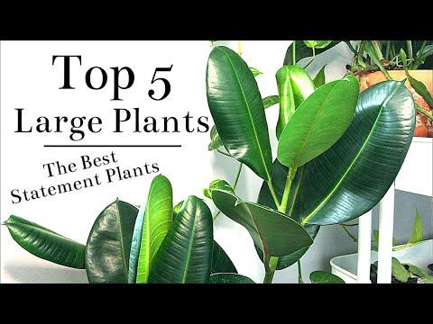 Top 5 Large Floor Plants