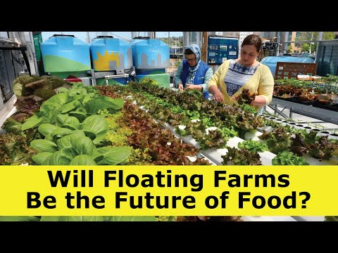 Will Floating Farms Be the Future of Food?
