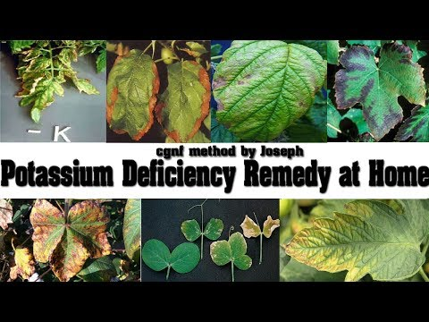 Fixing the Potassium Deficiency Naturally - Potassium Preparation at Home with no Cost