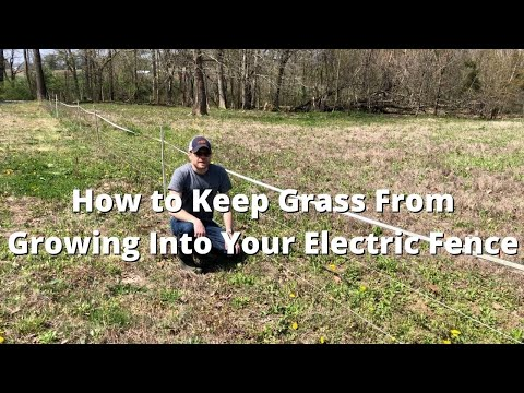 How to Keep Grass From Growing Into Your Electric Fence