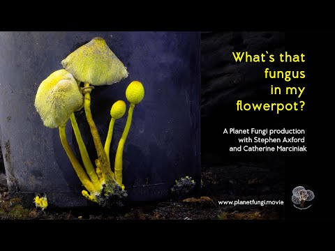 The Flower Pot Fungus: featuring time-lapse by Stephen Axford