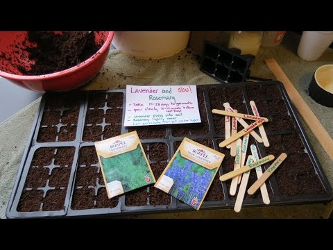Seed Starting and Germinating Lavender & Rosemary: Start Really Early! - TRG 2015