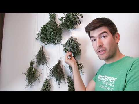Never Use an Oven or Dehydrator to Dry Herbs Again With This Century Old Method