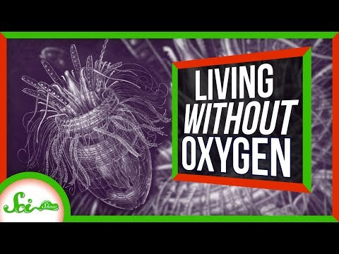 These Animals Don't Need Oxygen?!